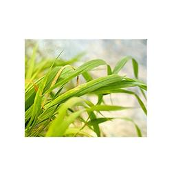 Grass Custom Interest Print Poster One Size Poster Paper Wal