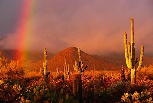 old metal arizona desert cactus
